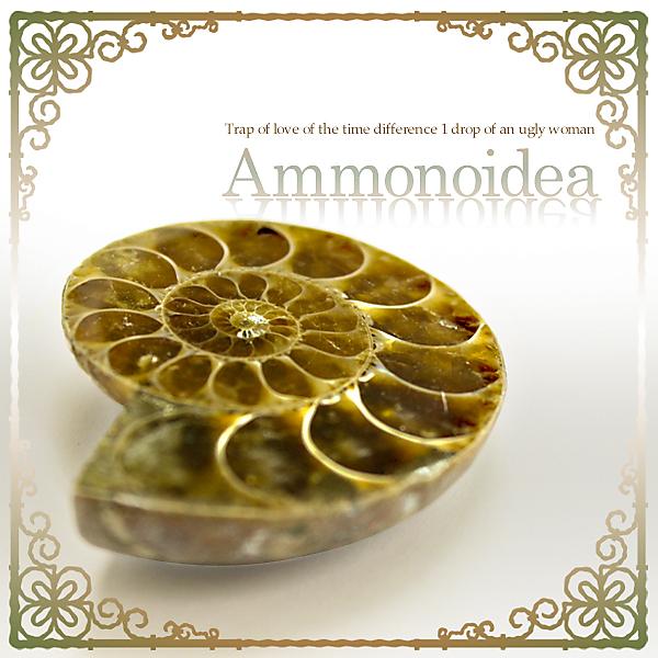 【Ammonoidea~アンモノイデア~】金運アイテム 太古の化石『アンモナイト』