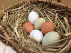 はっこう卵〈赤白緑セット〉