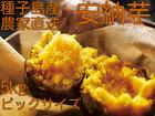 種子島産安納芋 5kg Lセット【10月20日~2月末までの期間限定販売・10月20日以降の発送になります】