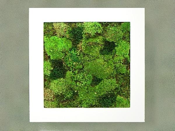 ひのきの香りのプリザーブドグリーン スクウェアフレーム 白 【フレグランス プリザーブドグリーン】 通常納期 約1か月