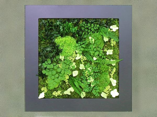 ひのきの香りのプリザーブドグリーン スクウェアフレーム 黒 【フレグランス プリザーブドグリーン】 通常納期 約1か月