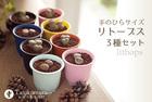 【サボテン 多肉植物】生きる宝石 リトープス3種セット★手のひらサイズ インテリアグリーン