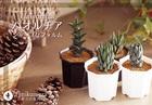 【多肉植物 サボテン】シャープな硬葉ハオルチア★手のひらサイズ インテリアグリーン