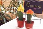 【サボテン 観葉植物】お洒落でかわいいキャンドルサボテン★インテリアグリーン