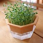 スプラウト栽培セット ブロッコリー・ラディッシュ種セット もやし栽培タイプ