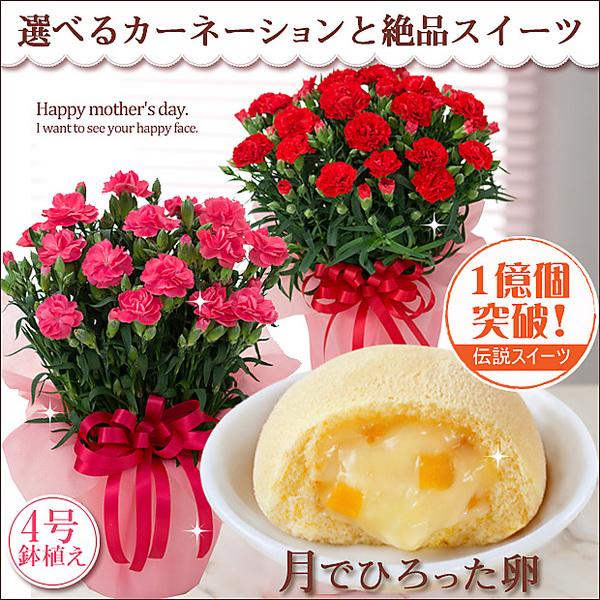 【母の日ギフト】選べるカーネーション鉢植え(ピンク)と絶品スイーツセット