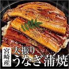 送料無料・【九州産】大振り うなぎ蒲焼 1尾