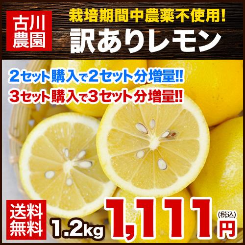 【W】【栽培期間中農薬不使用】長崎県産『古川農園』訳ありレモン1箱1.2kg(約8玉~12玉前後)2セット購入で2セット分おまけ、3セット購入で3セット分おまけ※/サイズ不選別/複数セットの場合1箱にまとめて配送《12月中旬-12月末頃より順次出荷》