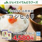 【あす楽】28年産米 10kg米 山形県産米 コシヒカリ米 ブランド米 JA米
