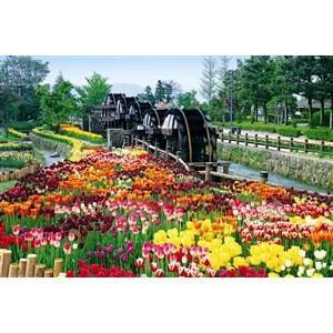 エポック社 23-553  五連水車と花咲く公園-富山 EP23-553ゴレンスイシャ