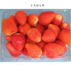 冷凍いちご 1kg(30~50粒