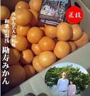 和歌山県有田 勘佐 寿人 作 勘寿みかん  2S~L寸 1箱(2kg入り)