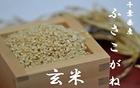 【送料無料】千葉県産ふさこがね玄米 10kg