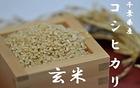 【送料無料】千葉県産コシヒカリ玄米 10kg