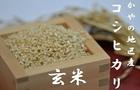 【送料無料】かやの地区産コシヒカリ玄米 10kg