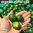 沖縄県産青切りシークワーサー果実1kg