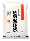 もっちりつやつや特別栽培米さがびより【完全無農薬栽培】白米5kg×2 佐賀県産
