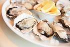 新技術冷凍DENBA+殻付き牡蠣 喜多嬉かき別撰 ひながき生食用 3kg