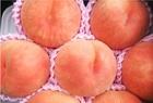 【予約販売】川中島白桃 家庭用 秀品 2kg ※8月下旬販売