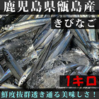 朝獲れ!!きびなご 生 冷凍便 鹿児島県 甑島産名物!!1キロ
