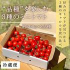 【期間限定】品種を楽しむミニトマト 3品種 食べ比べセット 約300g×3品種 キャロルスター キャロルムーン キャロル10 無農薬 青森県産 産地直送