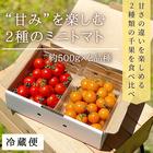 【期間限定】甘みを楽しむミニトマト 2品種 食べ比べセット 約500g×2品種 サマー千果 オレンジ千果 無農薬 青森県産 産地直送