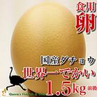 【国産ダチョウ】世界一大きなダチョウの卵【食用】