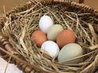 はっこう卵〈烏骨鶏〉