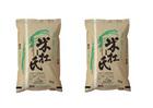 【送料無料】米杜氏新潟産こしひかり 10kg 【5kg×2】