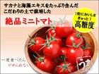 うまトマト(高糖度ミニトマト)