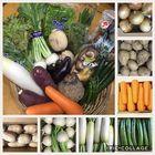 野菜セットA