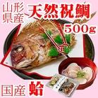 お食い初め 鯛 ハマグリ セット 500g 【送料無料】 祝鯛 焼き鯛 料理 はまぐり 天然 真鯛