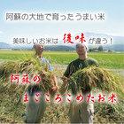 阿蘇のまごころこめたお米【玄米】