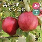 「葉とらずサンふじ」 レギュラー品 3kg