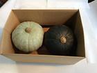 かぼちゃ2個セット