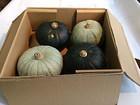 かぼちゃ4個セット