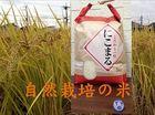 自然栽培のお米「にこまる」白米 10kg