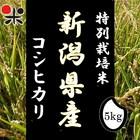 令和元年産 新潟県産 特別栽培米コシヒカリ 5kg