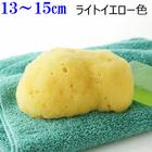 【送料無料】天然海綿スポンジabout14cm シルク種