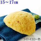 【送料無料】天然海綿スポンジabout16cm シルク種