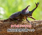 【送料無料】佐渡ヶ島かぶと虫・くわがた・飼育マット送料無料