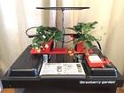 【送料無料】室内イチゴ自動栽培装置 イチゴガーデン