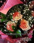 レインボーローズ・変った紅白のバラ「ジャパン」 お祝、お礼の花束