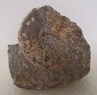 【サブプリオノサイクルス】北海道アンモナイト ・コリンニョニセラス科の珍しい化石 サイズも大ぶりな標本です。
