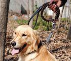 【ABT-001】犬用スプリング付皮ひも 首輪+蛇腹皮ひも L(中型) ピンク色チャーム付