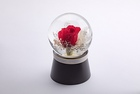 Fioradorm「水に咲く花」(red×white)