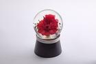 Fioradorm「水に咲く花」(red×red)