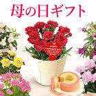 【送料無料】母の日 ギフト 選べる花とスイーツセット Aset【カーネーション3号鉢・赤】