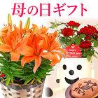 【送料無料】母の日 ギフト 選べる花とスイーツセット Bset【ゆり(オレンジ)どら焼き】
