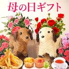 【送料無料】母の日 ギフト 選べる花とスイーツセットCset 【鉢花カーネ【赤】と和菓子】
